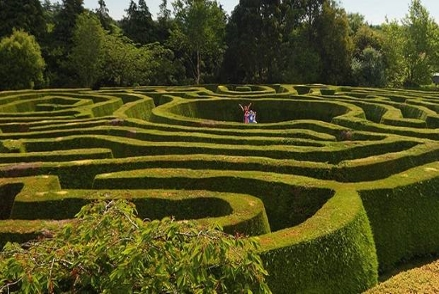 greenane-maze.jpg