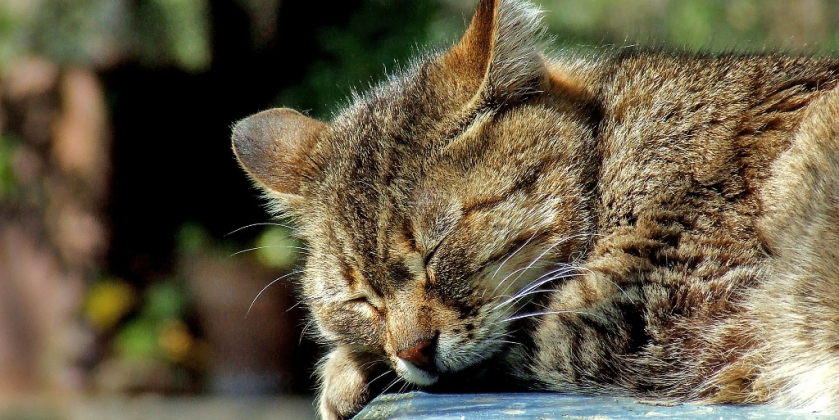 Sleeping cat - Resting helps recovery
